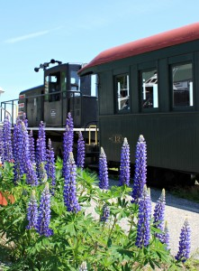 Lupines along the train platform in summer - Photo by Christina Napoli2