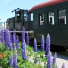 Maine Narrow Gauge Railroad Announces Rails and Ales Summer Event Series